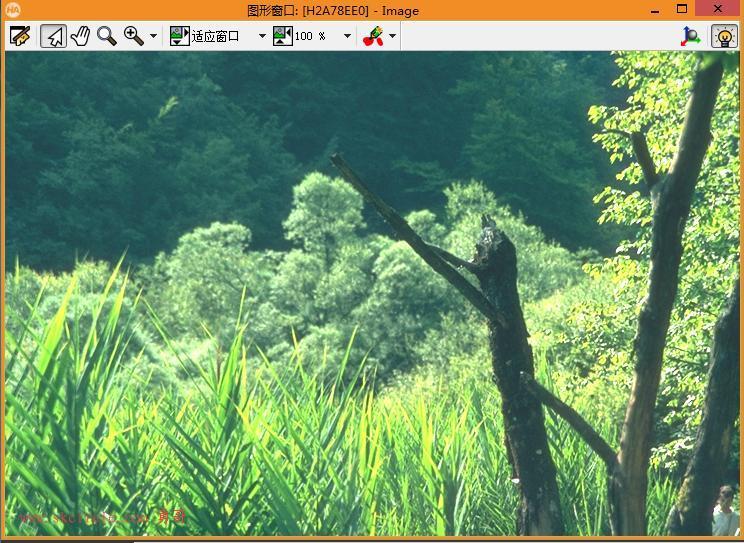 Inpainting图像修复系列:演示纹理修复,把背景中的树木去掉